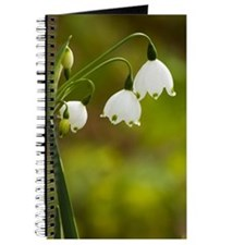 Lily of the valley Journal