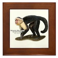 White-Headed Capuchin Framed Tile