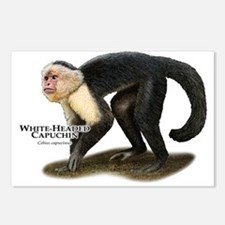 White-Headed Capuchin Postcards (Package of 8)