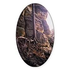 Enchanted Tree Oval Decal