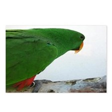 Eclectus series 4 Postcards (Package of 8)