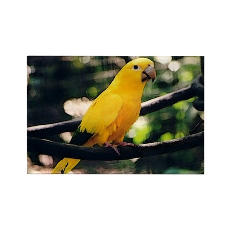 Golden Conure 2 Rectangle Magnet (100 pack)