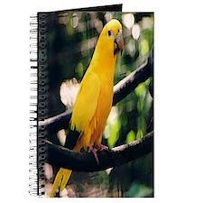 Golden Conure 2 Journal