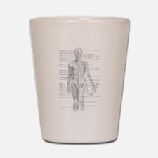 Human Anatomy Chart Shot Glass