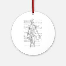 Human Anatomy Chart Ornament (Round)