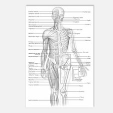Human Anatomy Chart Postcards (Package of 8)