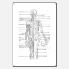 Human Anatomy Chart Banner