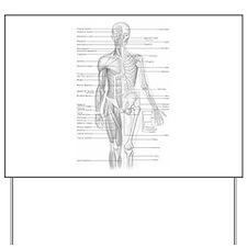 Human Anatomy Chart Yard Sign