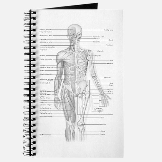 Human Anatomy Chart Journal