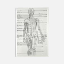 Human Anatomy Chart Rectangle Magnet (10 pack)