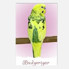 budgie4_shirt Postcards (Package of 8)