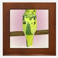 budgie4_shirt Framed Tile