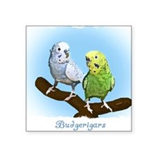 "budgies_shirt Square Sticker 3"" x 3"""