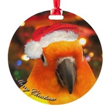 3-christmas_sunconure_ornament Ornament