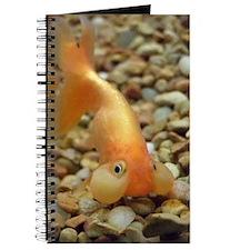 bubbleeye_sagging Journal
