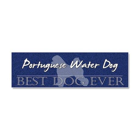 bestdogever_portuguese Car Magnet 10 x 3