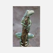 iguana_card Rectangle Magnet