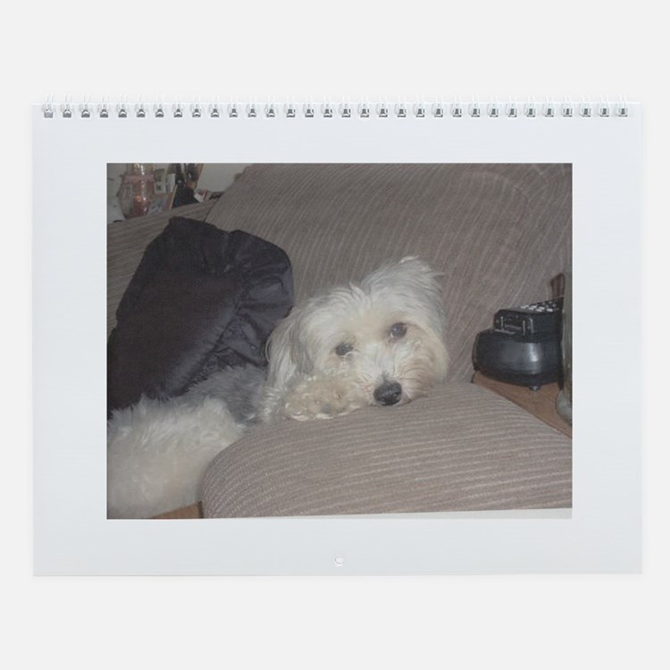 chinese crested powderpuff wall calendar
