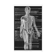 Human Anatomy Chart Decal