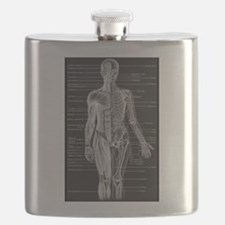 Human Anatomy Chart Flask