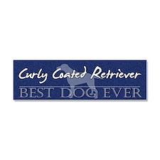 bestdog_curly Car Magnet 10 x 3