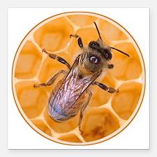 "honeybee-1 Square Car Magnet 3"" x 3"""