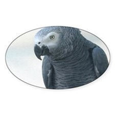 Grey Parrot Oval Decal