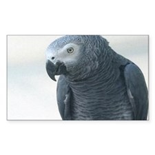 Grey Parrot Rectangle Decal