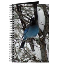 Stellar's Jay Journal