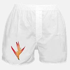 Bird of Paradise LG Boxer Shorts