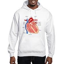 Human Heart Anatomy Hoodie