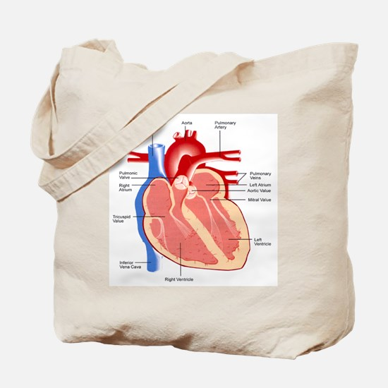 Human Heart Anatomy Tote Bag
