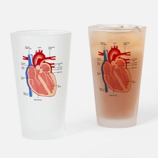 Human Heart Anatomy Drinking Glass