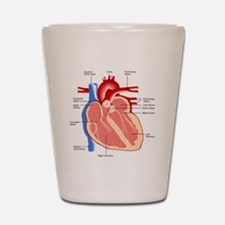 Human Heart Anatomy Shot Glass