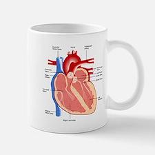 Human Heart Anatomy Small Mugs