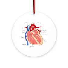 Human Heart Anatomy Ornament (Round)