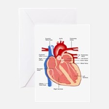 Human Heart Anatomy Greeting Card