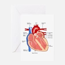Human Heart Anatomy Greeting Card