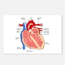 Human Heart Anatomy Postcards (Package of 8)