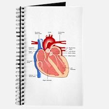 Human Heart Anatomy Journal