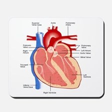 Human Heart Anatomy Mousepad