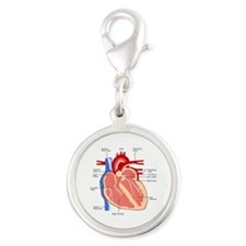 Human Heart Anatomy Silver Round Charm