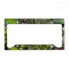 Rainforest Ferns License Plate Holder