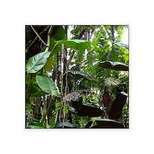 "Rainforest01 Square Sticker 3"" x 3"""