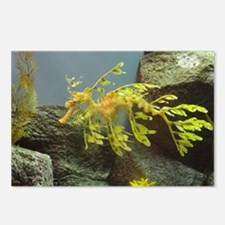 Leafy Seadragon Postcards (Package of 8)