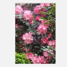 Flowers - Rhododendrons Postcards (Package of 8)