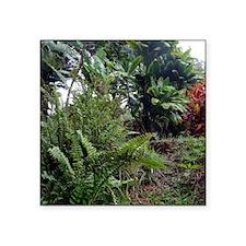 "Tropical Jungle 3 Square Sticker 3"" x 3"""