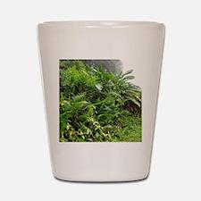 Rainforest Path 04 Shot Glass