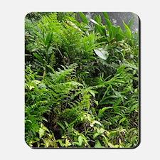 Rainforest Path 04 Mousepad