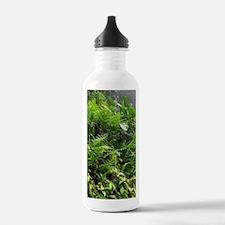 Rainforest Path 04 Water Bottle